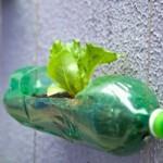 Use garrafas para o cultivo de plantas e monte um jardim vertical.