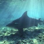 São tidos como os mais mortais do mar (Foto:Divulgação)