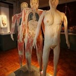 """Exposição """"O Fantástico Corpo Humano"""""""