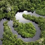 Floresta Amazônica (Foto:Divulgação)