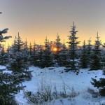 Gelo na Florestas de Tundra (Foto:Divulgação)