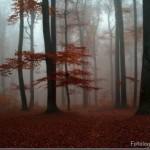 Floresta nublada (Foto:Divulgação)