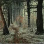 Inverno na Floresta (Foto:Divulgação)