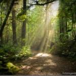 Fresta de luz na Floresta (Foto:Divulgação)