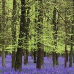 Floresta na primavera (Foto:Divulgação)