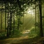 Floresta mais linda do mundo (Foto:Divulgação)