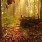 Outono na Floresta (Foto:Divulgação)