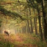 Biodiversidade na Floresta (Foto:Divulgação)