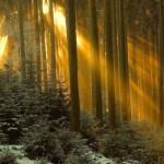 Entardecer na floresta (Foto:Divulgação)