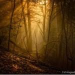 Floresta sombria (Foto:Divulgação)