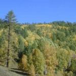 Floresta Boreal do Canadá (Foto:Divulgação)