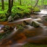 Floresta equatorial (Foto:Divulgação)