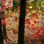 Floresta de Sherwood (Foto:Divulgação)