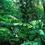 Floresta na Bacia do Congo (Foto:Divulgação)