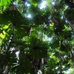 As Florestas precisam ser preservadas (Foto:Divulgação)