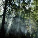 Floresta bonita, mas sombria (Foto:Divulgação)