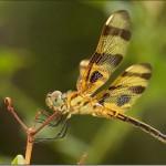 Os insetos estão presentes em todo o mundo (Foto:Divulgação)