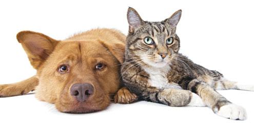 Dicas para melhorar a relação entre cães e gatos
