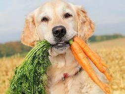 Dicas para acalmar os cães