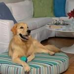 A almofada pode servir de acomodação para o cachorro no espaço de convívio.