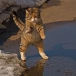 Gatinho com medo da água (Foto:Divulgaçao)