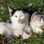 Gatinhos juntos tomando sol (Foto:Divulgaçao)