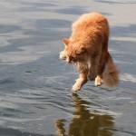 Gatinho medroso na água(Foto:Divulgaçao)