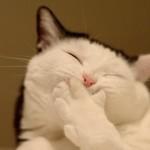 Gatinho branco e cinza em um momento ternura (Foto:Divulgaçao)