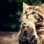 gato engraçado 1