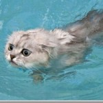 Gatinho tentando fugir da piscina(Foto:Divulgaçao)