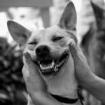 Cachorrinho feliz graças a ajuda do dono (Foto:Divulgaçao)