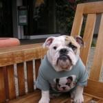 Cachorrinho com uma camiseta com a própria foto (Foto:Divulgaçao)