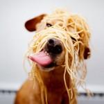 Cachorrinho comendo macarrão ou pelo menos tentando (Foto:Divulgaçao)