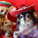 Cachorrinho mexicano(Foto:Divulgaçao)