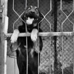 Cachorrinho preso(Foto:Divulgaçao)