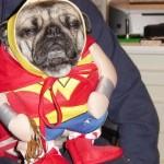 Cachorrinho vestido de Super Homem (Foto:Divulgaçao)