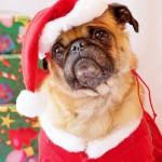 Cachorrinho de Papai Noel(Foto:Divulgaçao)