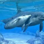 Mãe e filhote de Golfinho