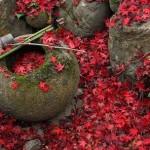 Folhas vermelhas em Kyoto (Foto: Divulgação)