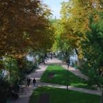 Árvores outonais em Paris (Foto: Divulgação)