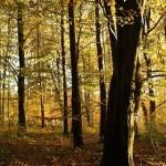 Floresta outonal (Foto: Divulgação)