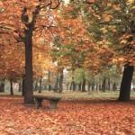 Árvores perdendo sua folhagem em Paris (Foto: Divulgação)