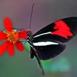 Suas asas combinam com as cores da natureza