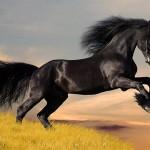 Cavalo Falabella
