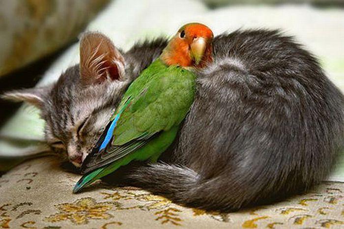 Amizade entre os animais: fotos