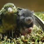 Amizade entre os animais - Pássaro e Roedor