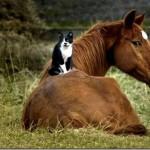 Amizade entre os animais - Gato com Cavalo