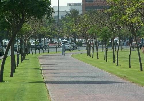 A calçada verde ajuda a preservar o meio ambiente e deixa a cidade mais bonita.
