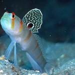 Peixinho colorido - Vive no fundo dos mares  possui de vários tipos e tamanhos.