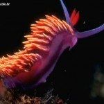 Lesma - Vive tanto no mar quanto em rio de água doce ou em ambientes terrestres e úmidos.